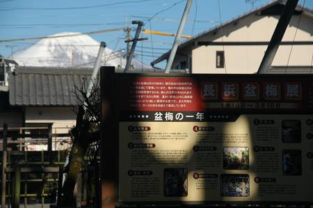 慶雲館からの伊吹山