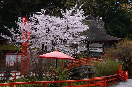 下鴨神社の桜風景