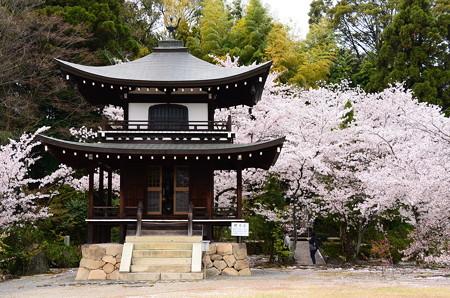 桜の観音堂