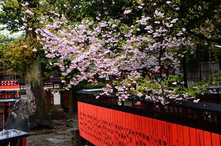 桜の車折神社