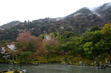 雨の曹源池と嵐山