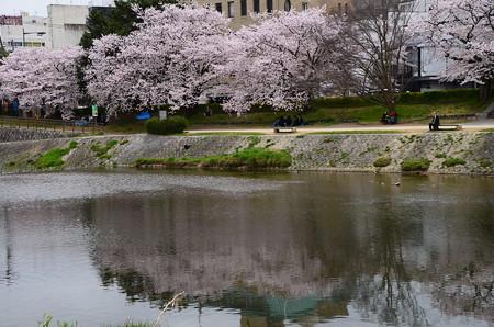 桜色の流れ
