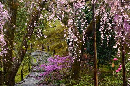 八重紅枝垂れと三つ葉躑躅と石楠花