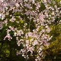 写真: 春の盛りを~