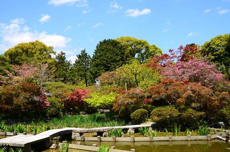 咲き始めた躑躅と新緑の咲耶池