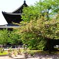 牡丹と関山の東寺