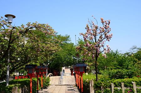 六孫王神社の桜風景