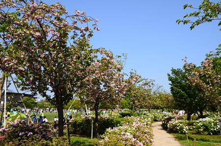 梅小路公園の八重桜