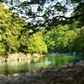 写真: 初夏の保津川