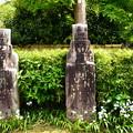 写真: 羅漢さんの足下に咲く射干(シャガ)