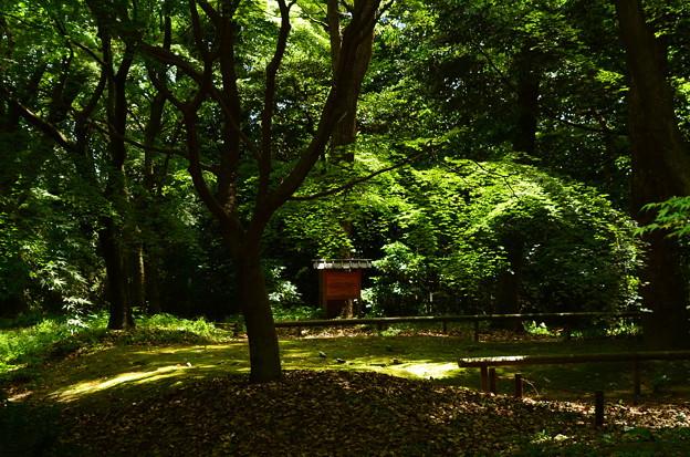 写真: 新緑の糺の森