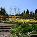 写真: 初夏の花咲くガーデンミュージアム比叡