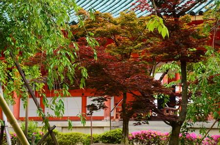 新緑と躑躅の平安神宮神苑