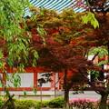 写真: 新緑と躑躅の平安神宮神苑