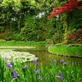 写真: 赤もみじと杜若の白虎池