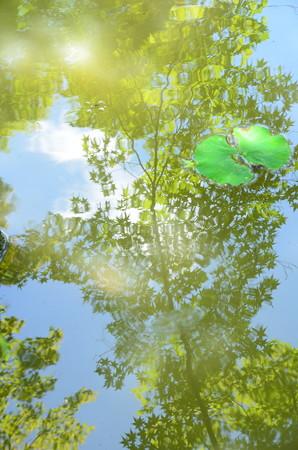 初夏を映す池
