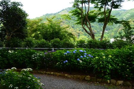 紫陽花園越しの大文字