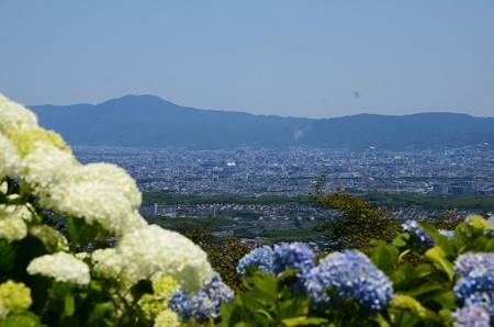 紫陽花越しの京都市内