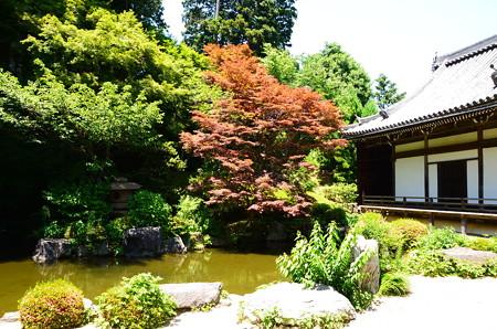 赤もみじの蓮華寿院庭園