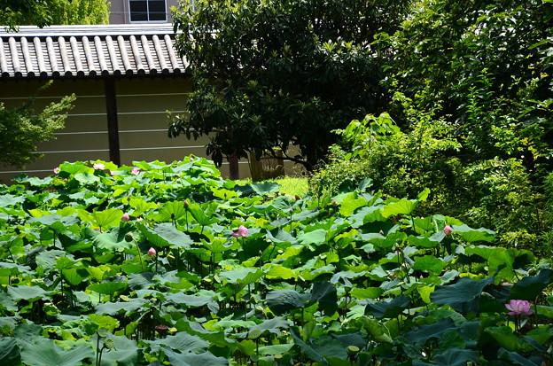 写真: 宝蔵南側