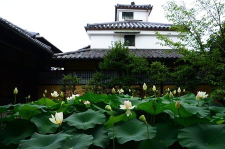 蓮咲く枳殻邸