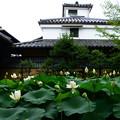 写真: 蓮咲く枳殻邸