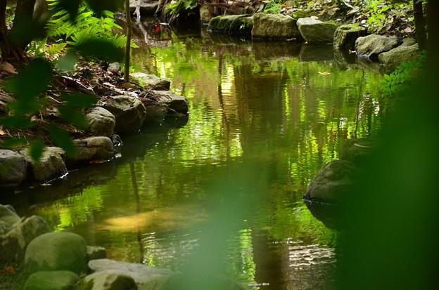 写真: 緑を映して~
