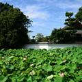 写真: 南禅寺蓮池