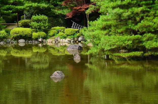 写真: 水面の夏