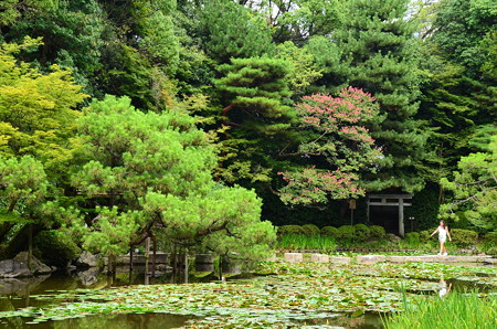 睡蓮と百日紅咲く蒼龍池
