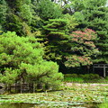 写真: 睡蓮と百日紅咲く蒼龍池