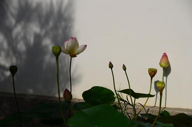 写真: 陰に咲く~