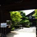 写真: 夏の日射しの金地院