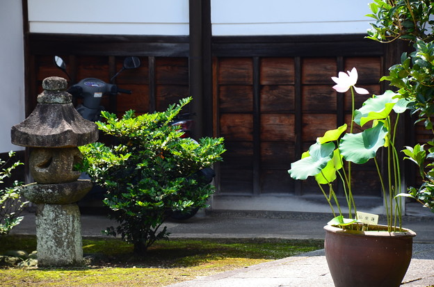 写真: 林光院の蓮