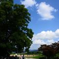 写真: 夏空の下で