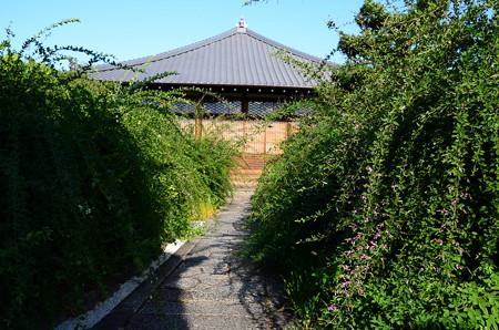 出町の萩の寺・常林寺の萩が咲き始めました