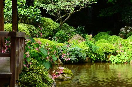 秋海棠咲く四方正面の池