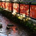 写真: 赤く染まる流れ