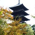 五重塔と百日紅(サルスベリ)