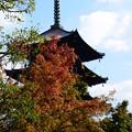 写真: 五重塔と紅葉