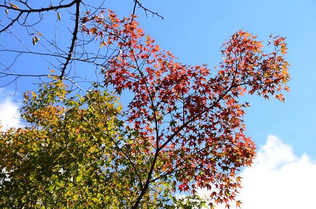 枝先の色付き