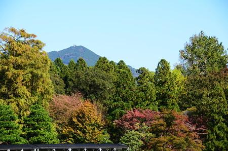 植物園の色づきと比叡山