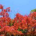 Photos: 秋空を染めて
