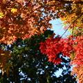 Photos: 西雲院脇の色付き