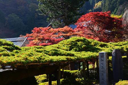遊龍の松と紅葉