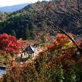 写真: 紅葉景色の善峯寺