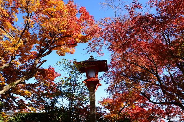 写真: 善峯寺の秋