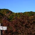 写真: 山も色付いて