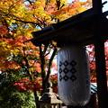 写真: 山門前の色付き