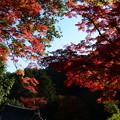 写真: 山門前の紅葉